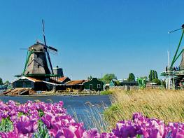 Image of Tulips & Windmills